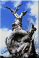 NT5820 : Dead elm tree on Minto Craigs : Week 16