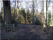 SP8302 : Knighton's Hill Wood by Shaun Ferguson