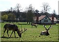 SP9633 : Deer in front of Park Farm, Woburn Abbey by Rob Farrow