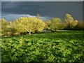TL4355 : Grantchester Meadows and River Cam by Hugh Venables