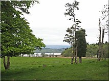G8303 : Parkland on the Rockingham Demesne by Oliver Dixon