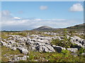 R3194 : Burren National Park by Adrian King