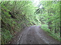 SX1665 : Path below the railway embankment in Draw Wood by Rod Allday