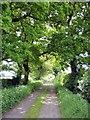 SJ7059 : Warmingham - Moss Lane by Mike Harris