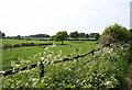 SJ5350 : Pasture near Cholmondeley Castle by Espresso Addict