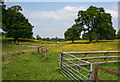 SJ5350 : Buttercups at Cholmondeley Park by Espresso Addict
