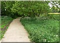 SK5701 : New path across the Aylestone Meadows by Mat Fascione
