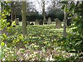 SP1198 : Spring flowers, St James' Churchyard, Mere Green by Graham Taylor