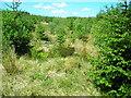 NY0094 : Forest of Ae by Iain Thompson