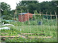 TL0237 : Allotment Gardens by Dennis simpson