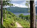 NN3205 : Loch Lomond : Week 23