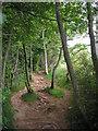 NT5633 : The Eildon Tree Path : Week 23