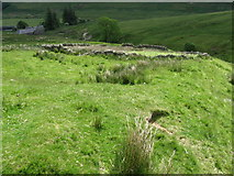 NT2822 : Sheepfold near Altrieve by Chris Wimbush