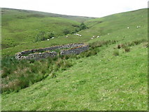 NT2722 : Sheepfold by the Altrieve Burn by Chris Wimbush