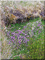 NG3050 : Wild flowers on the old road by Richard Dorrell