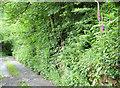 SJ9994 : Pingot Lane by Stephen Burton
