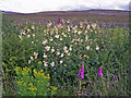 NG2845 : Roadside wildflowers by Richard Dorrell