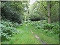 SU8396 : Naphill Common by Nigel Cox