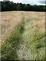 SE3001 : Footpath crossing partly mown field by Wendy North