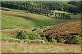 NT2630 : Gumscleuch Burn, Peat Hill by Jim Barton