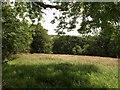 SX2059 : Trewen Wood across a field by Derek Harper