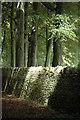 SP1733 : Beech trees, Batsford : Week 29