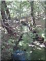 SW7025 : Stream running through beech woods in Gweek Drive by Rod Allday