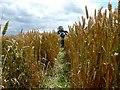 SK3198 : Footpath through wheat field by Wendy North
