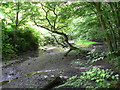SX4659 : Carr woodland  at Budshead Woods, Plymouth. by Mick Lobb