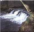 SX3564 : Pillaton mill weir on the river Lynher by Trevor Rickard
