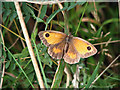 TG4519 : Gatekeeper (Pyronia tithonus) by Evelyn Simak