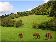 SU8499 : Horses grazing at Speen by Andrew Smith