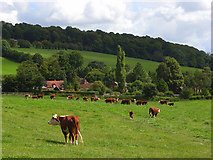 SU8498 : Pasture, Upper North Dean by Andrew Smith