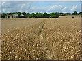 SU8899 : Farmland, Prestwood by Andrew Smith