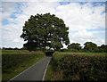 Dist:0.9km<br/>The narrow lane from Northop Hall Village to the Connahs Quay road B5126 makes a detour around a splendid oak tree.