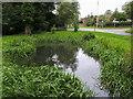 SU9094 : Pond at Potter's Cross by Shaun Ferguson