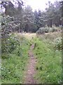 Dist:0.6km<br/>One of the tracks through the wood. A popular place with dog walkers