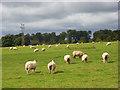 SU8085 : Pasture above Medmenham by Andrew Smith