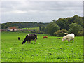 SU8086 : Pasture above Medmenham by Andrew Smith