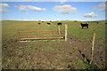 NS5827 : Farmland at Tincorn Hill by Walter Baxter