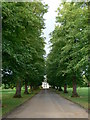 TL2862 : Avenue of trees near Papworth Hospital by Eirian Evans