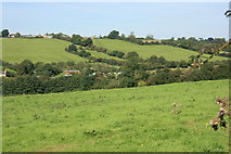 ST6657 : 2008 : Pasture in the valley, near Paulton by Maurice Pullin