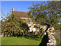 SO9805 : Apple Trees by Stuart Wilding