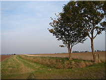 TF4382 : Withern Highland Drain Looking Northeast by Ian Paterson