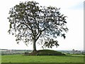 N8873 : Mound at Rathcoon, near Navan, Co. Meath by JP