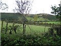 C2910 : Ardagh Townland by Kenneth  Allen