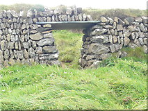 SW9280 : A sheep 'smoot' in a Cornish Hedge by Paul Harvey
