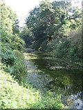 SU7151 : Basingstoke Canal by Sandy B