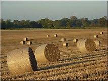 SU3061 : Farmland, Shalbourne by Andrew Smith