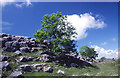 SD5579 : Limestone scenery, Newbiggin Crags by Tom Richardson